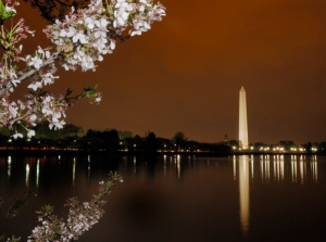 Cherry blossoms at night along the Tidal Basin with the Washington Monument in the distance.