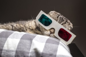 funny-cat-watching-a-movie-on-television-in-3d-glasses